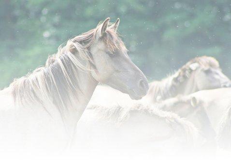 Dierenkaart  paarden veel liefs 2