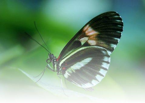 Dierenkaart Verjaardag Senior Vlinder 2