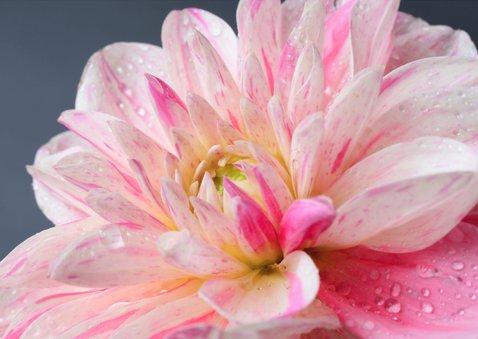 Jij bent lief! met een foto van een roze bloem 3