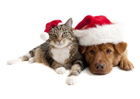 Kerstkaart Sending Warmest Wishes goudlook met eigen foto 2