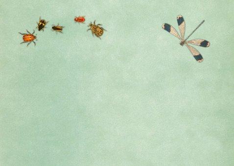 Kinderfeestje met heel veel insecten 2