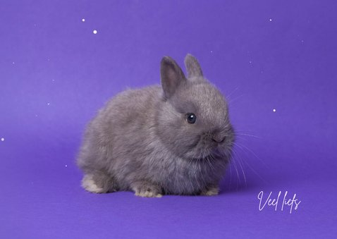 Kinderkaart - Knuffel konijntje paars 3