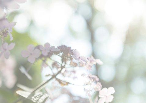 Sterkte kaarten bloem MM 3