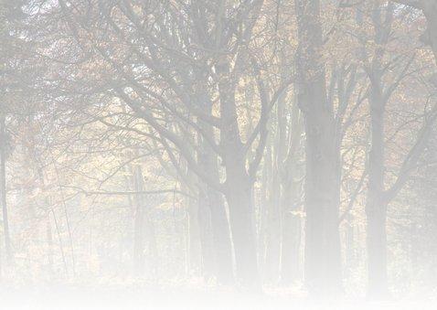 Verstild herfstbos in vriendelijk licht 2