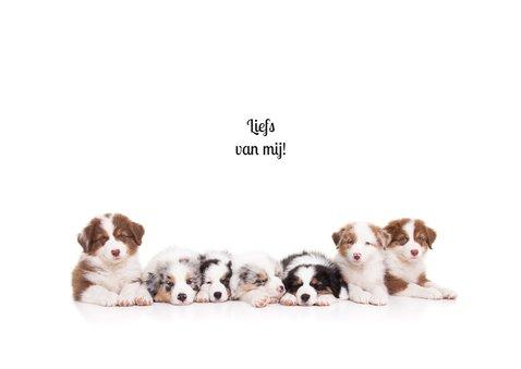 Zomaar een kaartje - Puppies 3