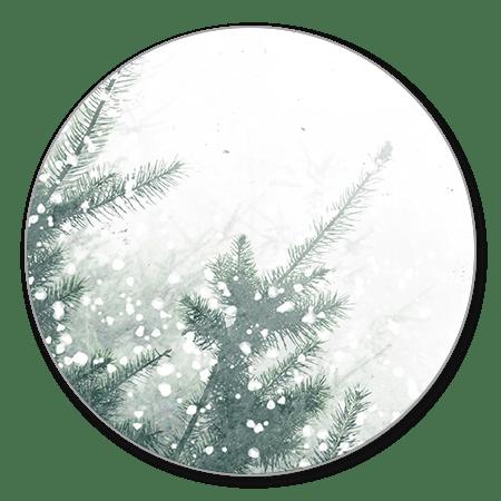 Kerstbomen met sneeuw