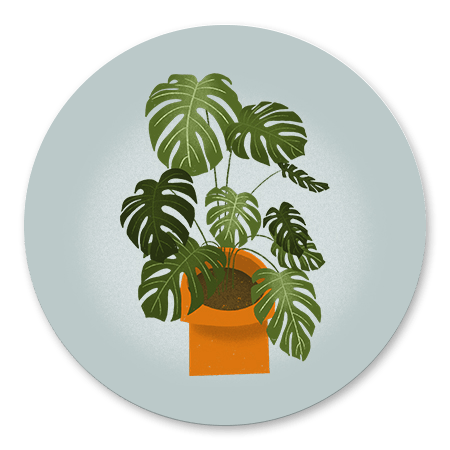 Housewarming Monstera