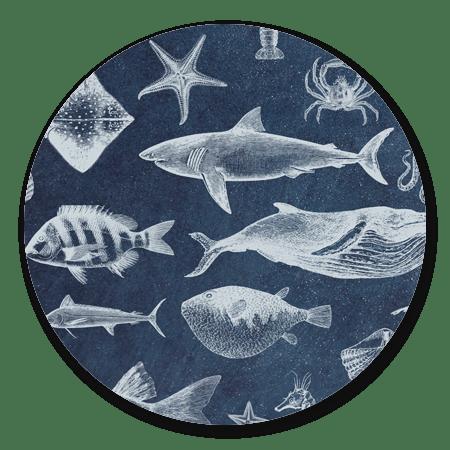Zeedieren blauw